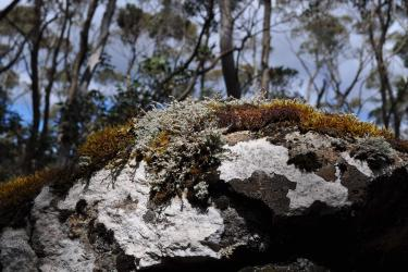 Image: Mt Field National Park, Emily Chapman-Searle